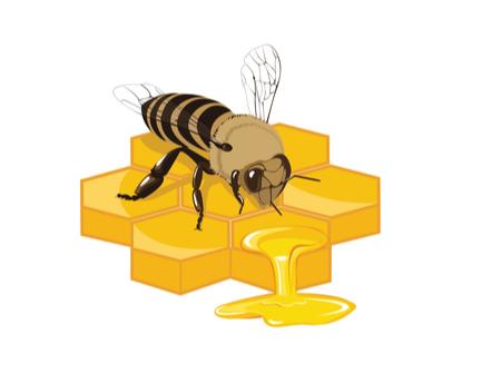 gelée royale abeilles